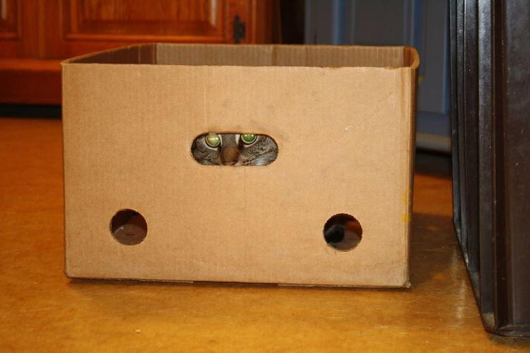 Augen Basket Box Cat Cats Eye Eyes Hide Hide And Seek Karton  Katze Katzenaugen Relaxation Sitting Verstecken Verstecken Spielen