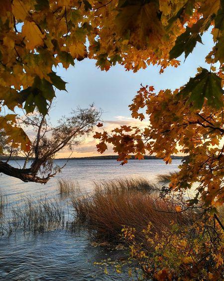 Autumn Autumn2016 осень2016 осень Осень2016 Россия скреблово озеро врево лужский район Луга Luga Russia мояленобласть влугехорошо