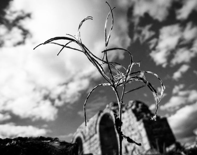 EyeEm Best Shots EyeEm Best Shots - Black + White Blackandwhite Black And White Photography Black & White EyeEm Bnw Sky_collection Sky Sky And Clouds Sky_collection Skyporn Clouds And Sky Clouds Collection Clouds Collection Close-up Macro_collection Macro Macro Photography Ruins Priory Nunnery Check This Out Showcase: February Shropshire Macro Beauty