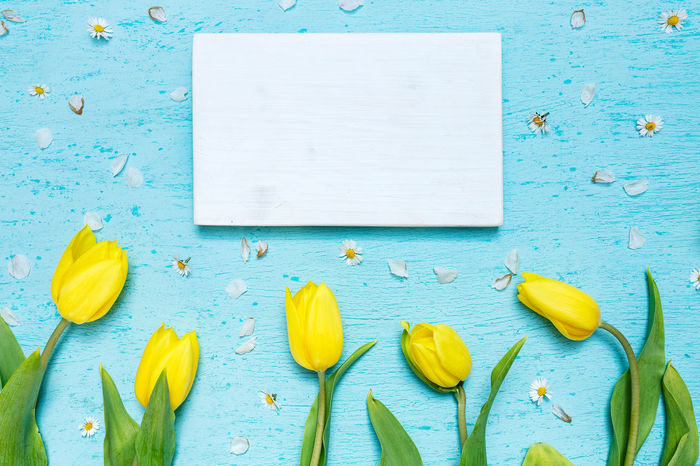 Cyan tabletop scene with yellow tulips and white wooden frame Tulips White Frame Blank Blank Wood Frame Blue Directly Above Flat Lay Flatlay Flowers Freshness Green Color High Angle View Indoors  Spring Flowers Still Life Table Tabletop Tabletop Scene Tulips Flowers Yellow Yellow Tulips