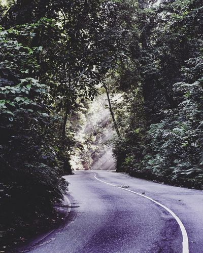 Streets of Jamaica (IG: saschakoellefornia Tree Nature The Way Forward Growth Road Day Outdoors Beauty In Nature No People Tranquility Scenics Forest street Traveling Wanderlust Travel Photography Green Color Travel Jamaica