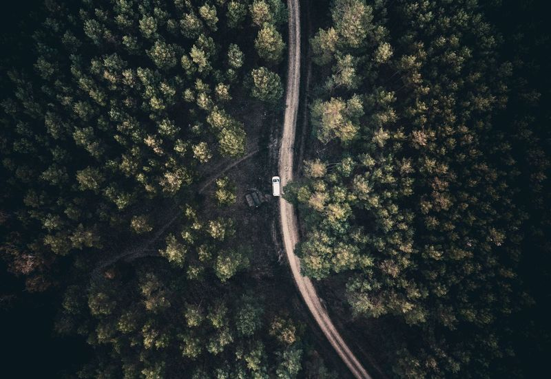 Into the woods. Nature Perspective Dronephotography Drone  Home Is Where You Park It VW Bus Wald Tree Plant Growth No People Nature Day Sunlight Outdoors Beauty In Nature Forest Shadow Green Color Land