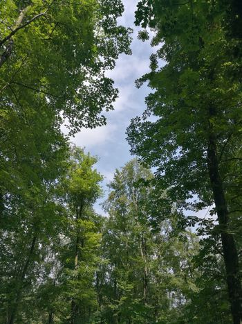 Tree Forest Branch Tree Area Leaf Backgrounds Sky Green Color