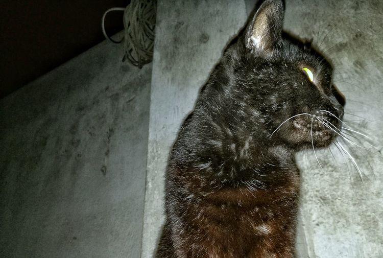Cats Mushu