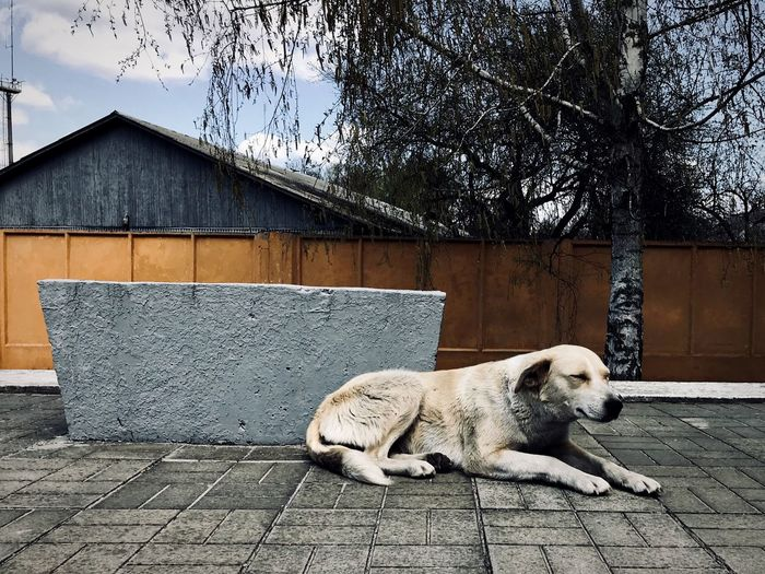 dogs of Chernobyl Dogs Of Chernobyl Chernobyl Exclusion Zone Chernobyl Animal Themes Mammal Animal One Animal Vertebrate Domestic Animals Relaxation Canine Dog Architecture Day No People Resting Lying Down Built Structure Sunlight Nature