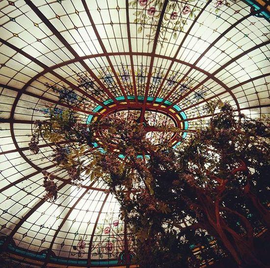 Canopies Canopy