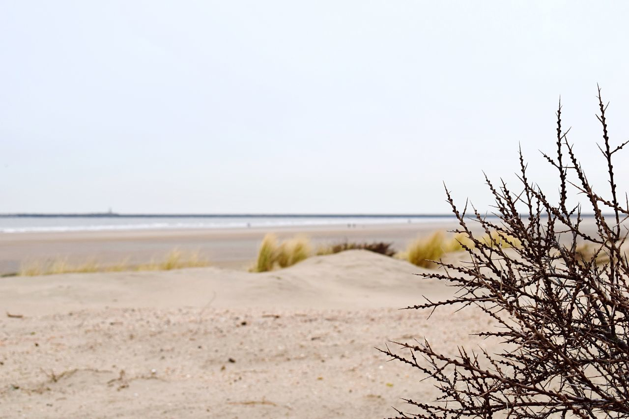 nature, tranquility, tranquil scene, beauty in nature, beach, scenics, day, no people, sea, clear sky, water, sky, sand, outdoors, horizon over water, grass