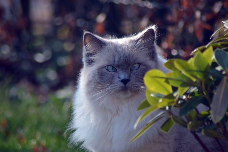Close-up of cat in garden