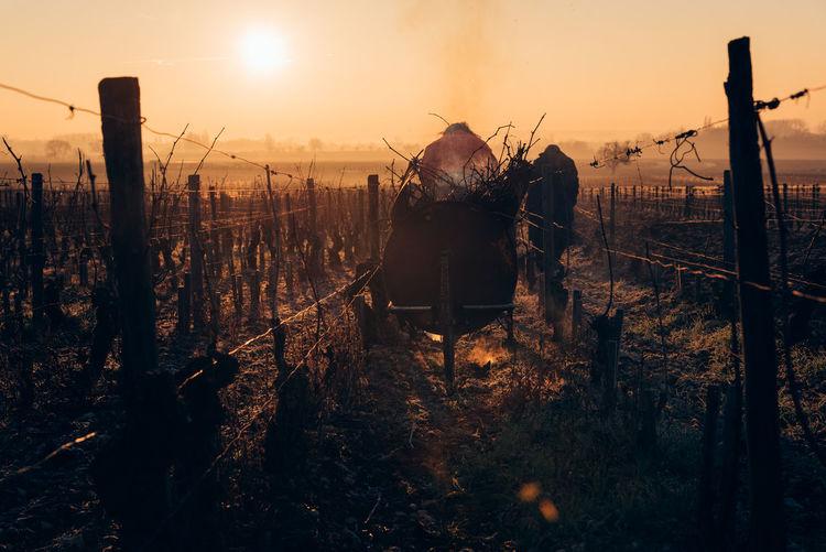 Wheelbarrow amidst fence and dry plants against sky during sunset