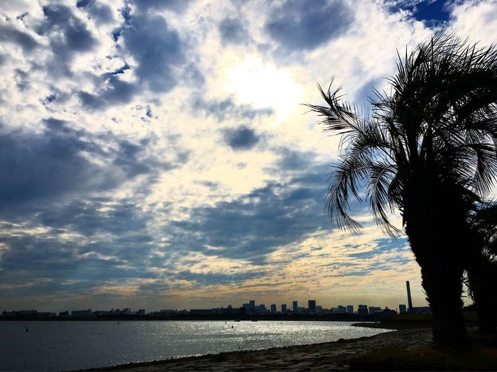 The Great Outdoors - 2016 EyeEm Awards Japan Tokyo Bay Relaxing Moments Sea And Sky Sky And Clouds Clouds And Sun Palm Tree Miles Away