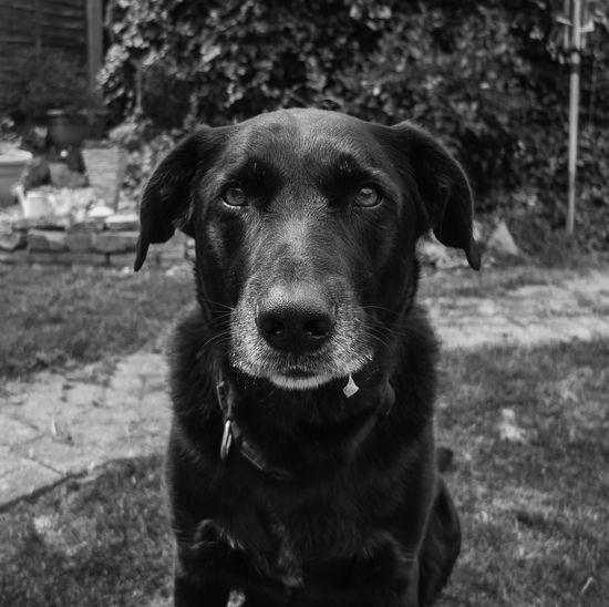 Portrait of cute dog sitting in garden