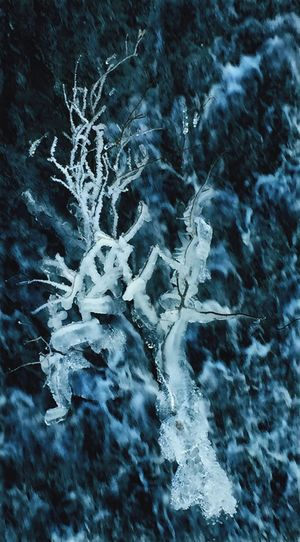 Ice Winter Snow Frozen Ice Beauty In Nature Outdoors Weather Nature Tree