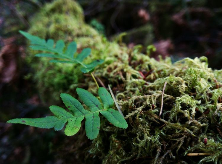 Macro Photography Nature Photography PhonePhotography Enjoying The Sun Hiking Trail Moretocome