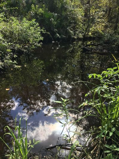 Beauty In Nature Day Forest Green Color Growth Lake Land Leaf Lush Foliage Nature No People Outdoors Plant Rainforest Reflection Scenics - Nature Tranquil Scene Tranquility Tree Water WoodLand
