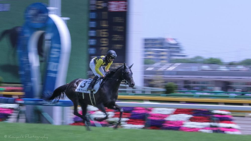 Racecourse Tokyo Racecource Horse Horses Panning Shoot EyeEm Best Shots EyeEm Sport Sports Sports Photography