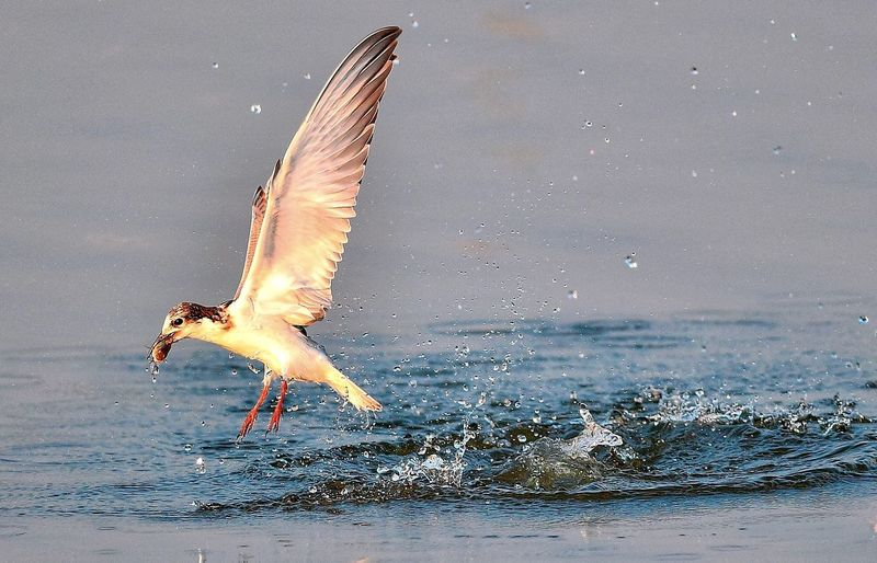 View of seagull flying over sea
