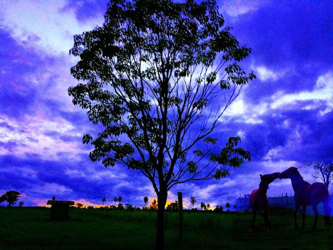 Sunset Sunset Horses Tree Sky Cloud - Sky Nature Beauty In Nature No People Tranquility Outdoors Landscape Scenics