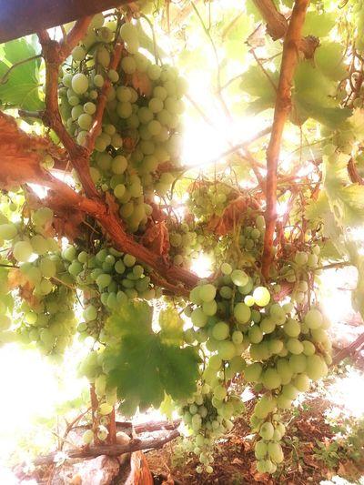 Organik üzüm First Eyeem Photo
