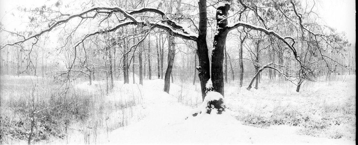 horizon 202 winter #analogue #analogphotograpy #Winter #panoarma #blackandwhite #bnw Tree Day Outdoors Adventure Real People Men Nature