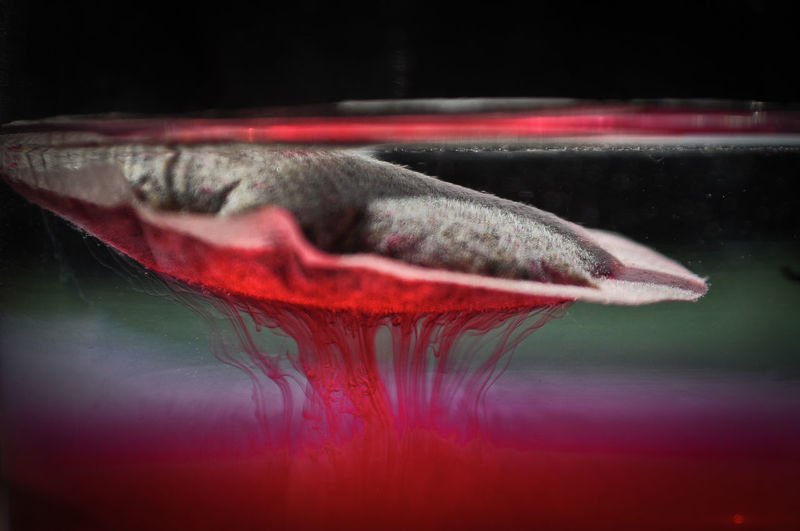 Tea Abstract Comfortable Dissolution Filter Glowing Home Ideas Liquid Macro Red Relax Tea Teafilter Water