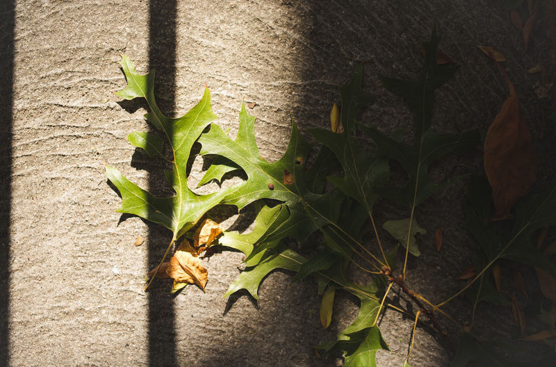 Close-up of leaves against wall