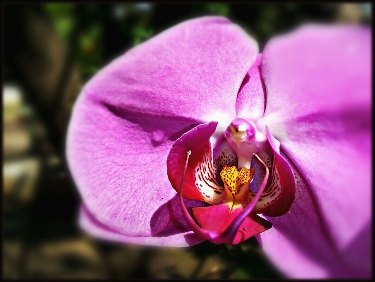 Happy weekend! *.* Beautiful Day Pink Orchids Beautiful Colorful Lush Macrophone Mobile Photography Close-up Shot