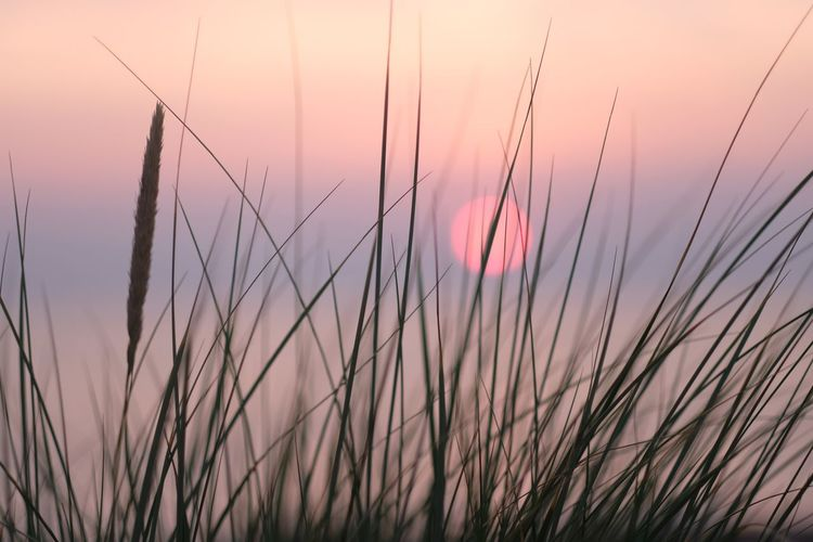 Sonnenuntegang am Meer Abendstimmung Abendsonne F1.2 Fujinon56mm1.2 Schilfgras Sonnenuntergang Sunset Sky Plant Growth Beauty In Nature Tranquility Nature No People Close-up Scenics - Nature Grass Orange Color Tranquil Scene Idyllic