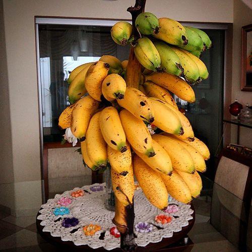 Bananas Ourinho Bananaourinho Fruits Francasp Galaxya5 SamsungGalaxyA5 Perfection Francolandia Giuhouse Delicious Doce Honeyed Sweet Yellow Food Francasp Health