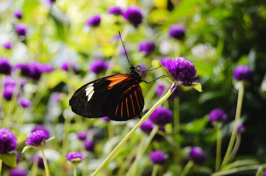 Time for a snack Insect One Animal Flower Butterfly - Insect Animals In The Wild Beauty In Nature Purple Nature Fragility No People Plant Day Butterfly Animal Wildlife