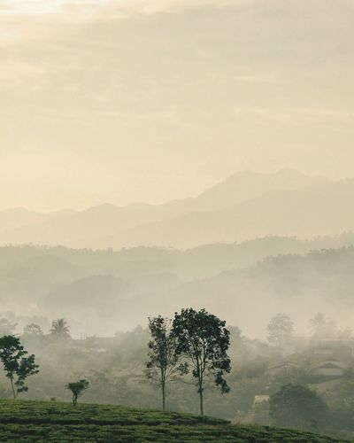 Perspectives On Nature INDONESIA Beauty Indonesia Jawabarat Fog Tree Mist Landscape Hazy  Nature Beauty In Nature Tranquility Tranquil Scene Scenics Foggy Idyllic Majestic Remote Mountain Outdoors No People Day Sky