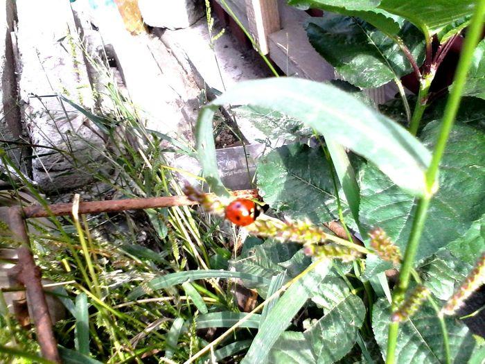 Ladybug Wolfzuachis Ladybeetle Green Plants Eyeem Market