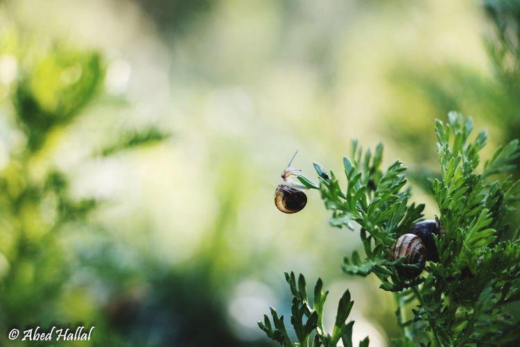 Lebanon Bokeh Morning Taking Photos Animals Nature Snail