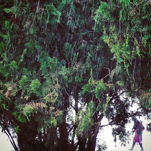 Ju Cafeteria Tree Rain Lady Girl