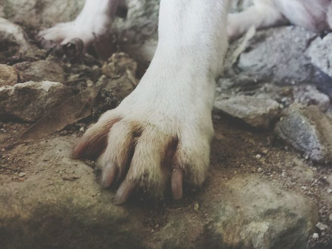 Mammal Domestic Animals One Animal Rock - Object Outdoors Dirty No People Dog Dogs Of EyeEm Dogs Dogpaw Paws Paw