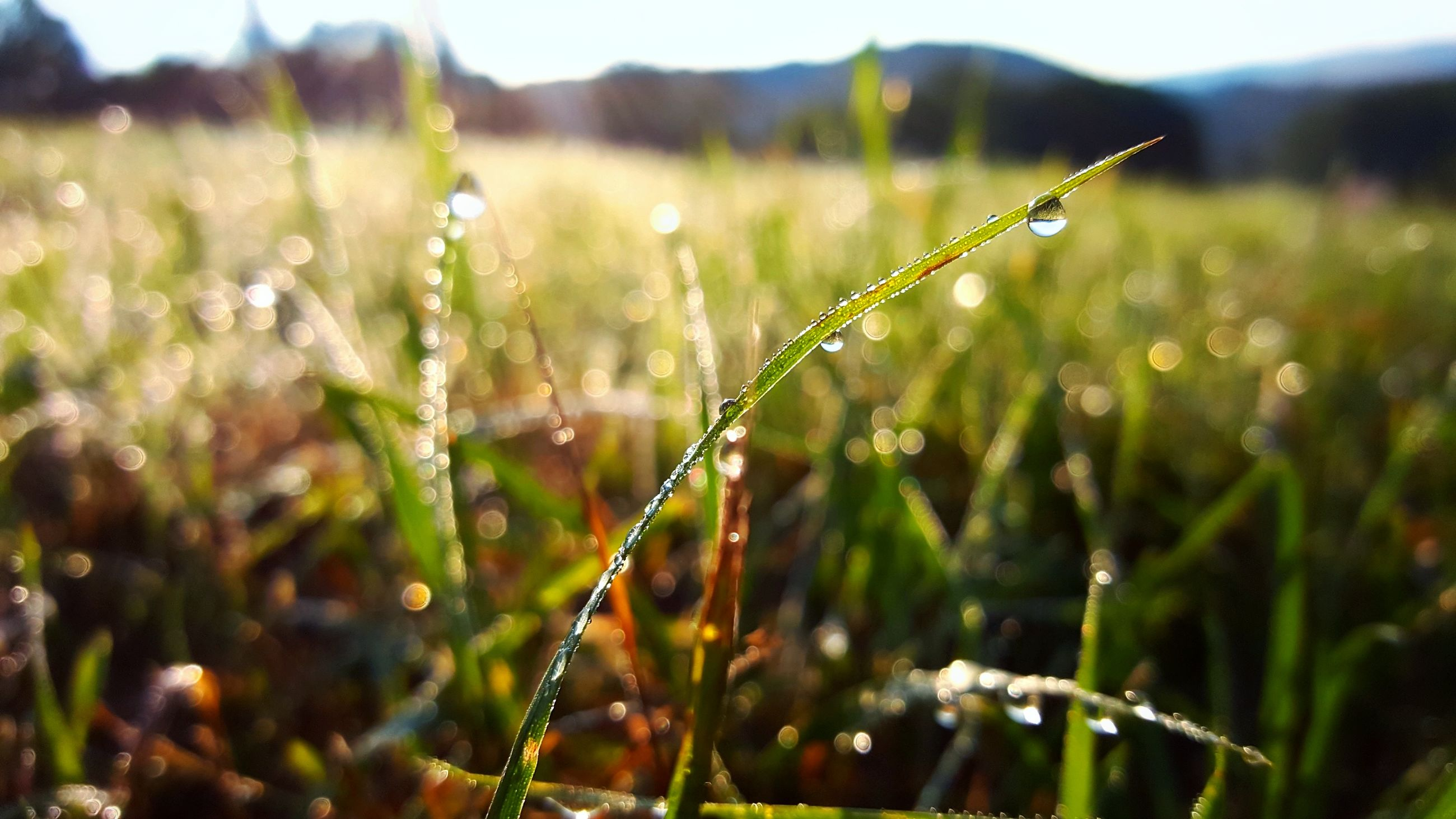nature, growth, drop, plant, beauty in nature, grass, no people, close-up, outdoors, wet, field, water, day, landscape, fragility, freshness