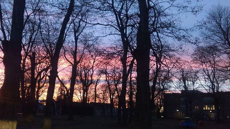 Showcase: February Winter New York Trees Sunset Beautiful Playground School