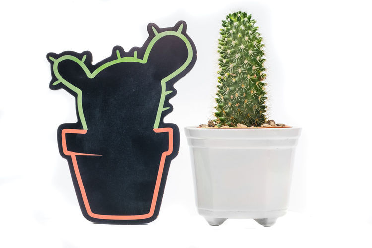 chalkboard & cacti Blogging Cacti Art And Craft Botany Cactus Chalkboard Close-up Creativity Cut Out Decoration Flower Pot Gardening Green Color Growth Houseplant Indoors  Nature No People Plant Potted Plant Still Life Studio Shot Succulent Plant Tree White Background