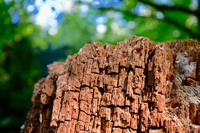 Trunk Detail Trunk Texture Tree Focus On Foreground Tree Trunk Nature Wood - Material Textured  Forest Trunk No People Close-up Day Plant Bark Outdoors Timber Brown Wood Tree Stump