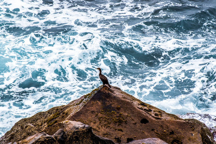 High Angle View Of Cormorant Perching On Rocky Shore