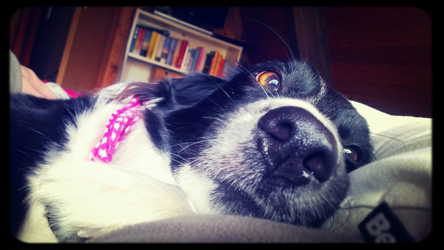 Dog Relaxing Picoftheday Filippa K Asks: What Inspires You? my dog :)