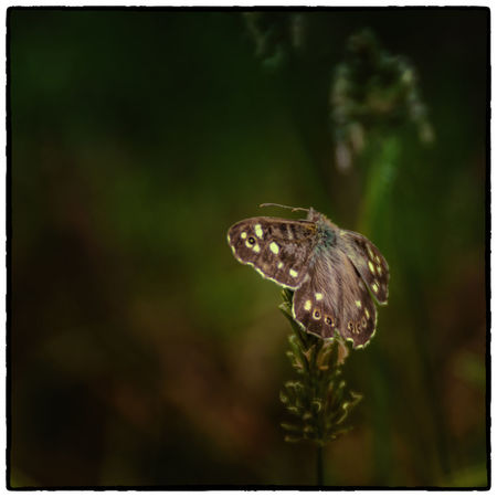 Beauty In Nature Butterfly Close-up Cruagh Woods Day Dublin Dublin Mountains Focus On Foreground Fragility Growth Ireland Irelandinspires Ireland🍀 Nature No People Outdoors Plant Selective Focus Tranquility Wildlife