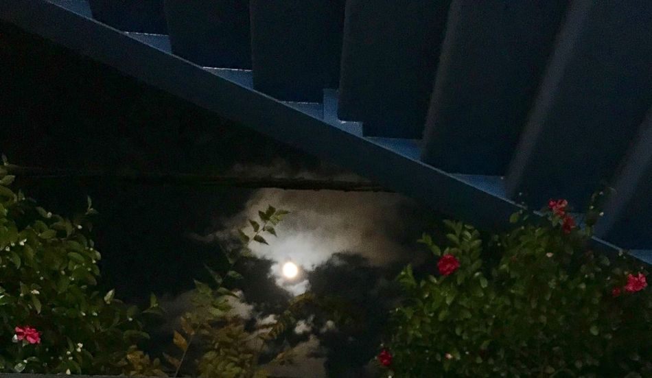 Full Moon Plant Night No People Illuminated Nature Architecture Built Structure