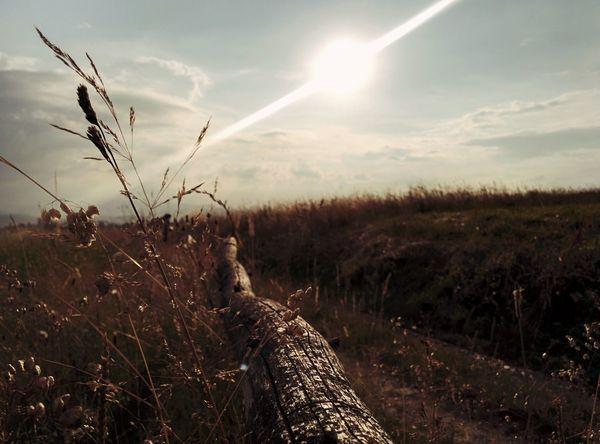 Meadow Village Myhometown Sun