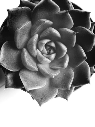 Blackandwhite Planting Succulents Growing Up