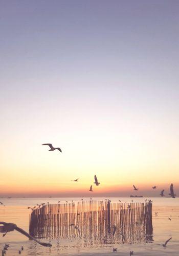 Seagull flying over beach against sky during sunset