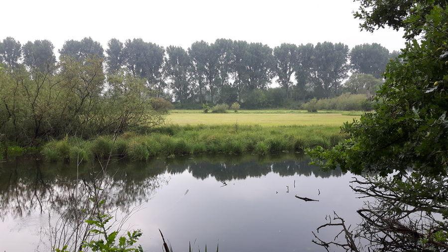 Tree Water Irrigation Equipment Reflection Sky Grass