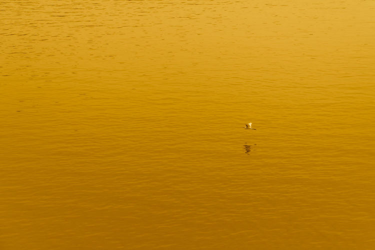 High angle view of bird floating on sea