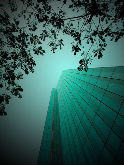 2016 Photos Blue Green  Buildings & Sky Down View Fresh Latest Styles Modern Nature Nature Nature 2016✌ Nature_collection Nature Photograhy Newbie Night Love Night Views Photography Summer Summer Set In Melbourne Sunset Colors Trees U Vanish Vanishing Point Views From Below