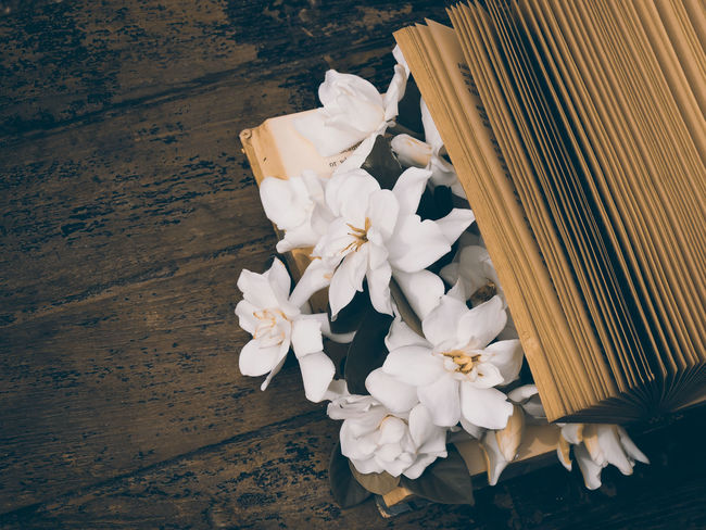 Vintage still life with old book page and white flower on wood table Bookpage Day Flower Freshness Nature Old Book Relaxing Retro Styled Still Life Vintage Style