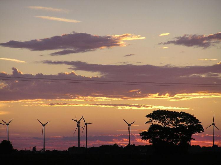 Sunset 2015 Sunset Tree Sunshine Sky Sky And Clouds Sunlight Sundown Landscape Windmill WindGenerator